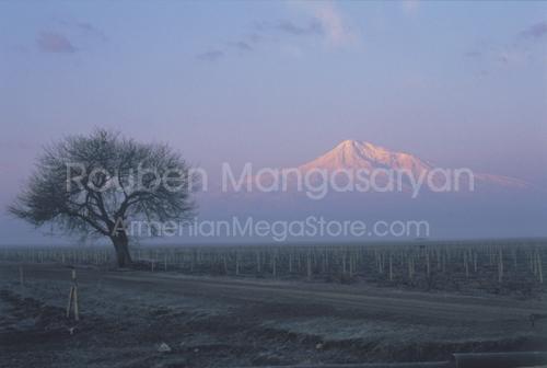 Tree on Ararat Valey